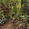 Marathon de Bois - Indonésie, dans la forêt tropicale équatoriale de Sumatra