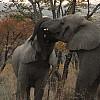 Marathon de la Terre – Afrique du Sud, au plus près des éléphants d'Afrique